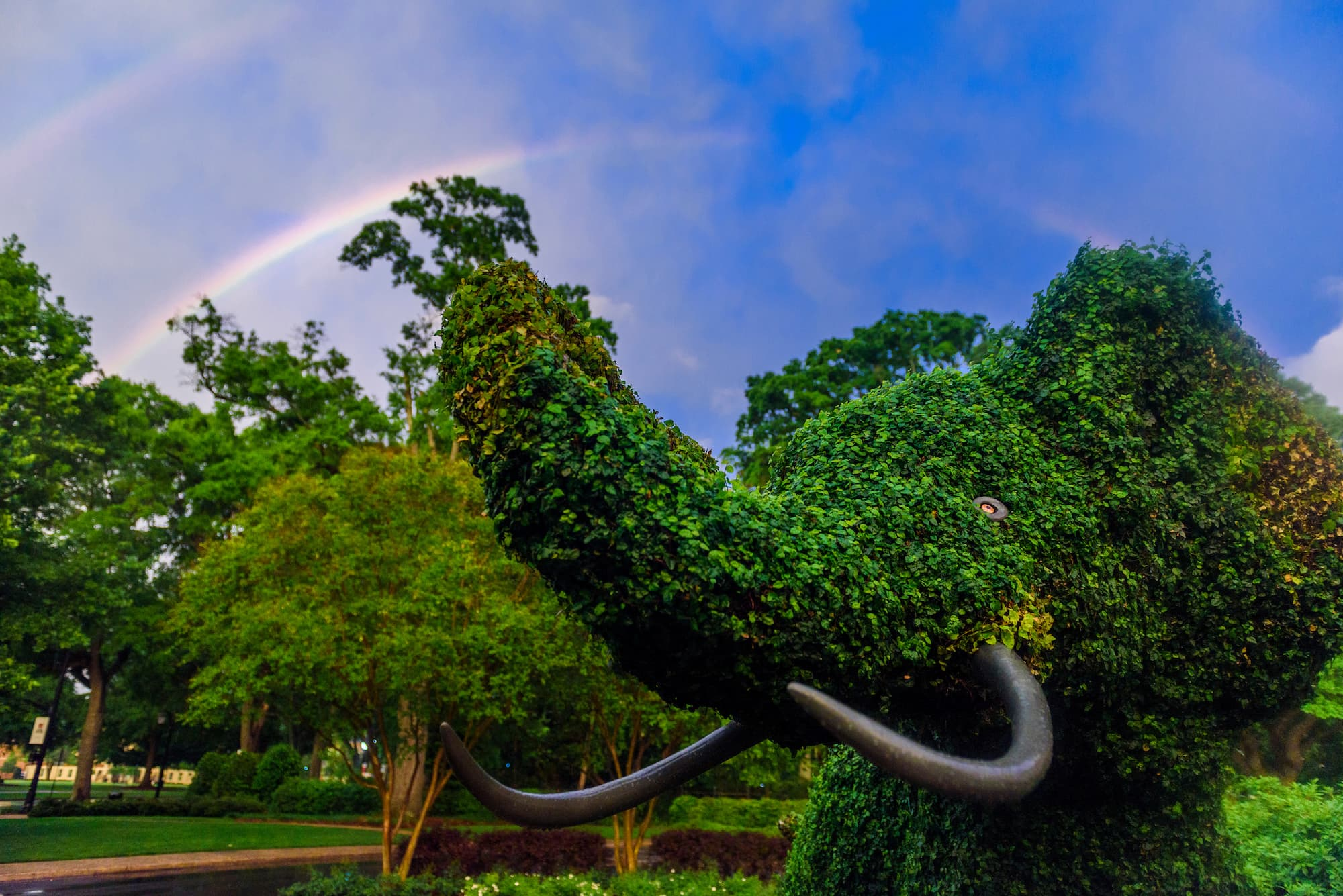 Topiary elephant outside the Rose building