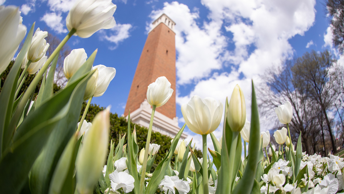 Tulips in bloom in front of Denny Chimes